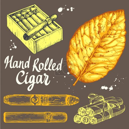 Vector illustration with classical smokeking set. Bunch of tobacco box, hand rolled cigars, leaf in sketch style. Best cuban quality.