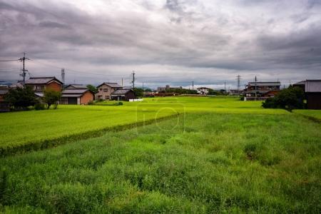 Japan Rice field in Zoshi-cho