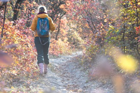 Hiker walking on autumnal Forest