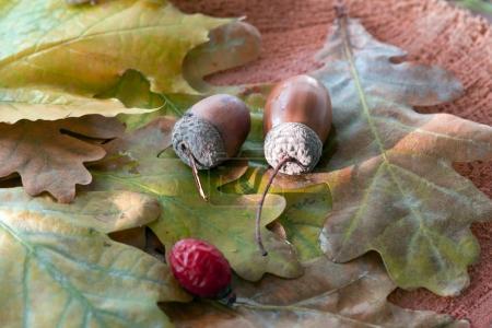 Autumnal Stuff on table
