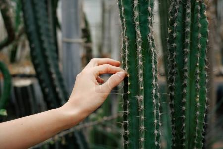 Woman try to touch to cactus thorn