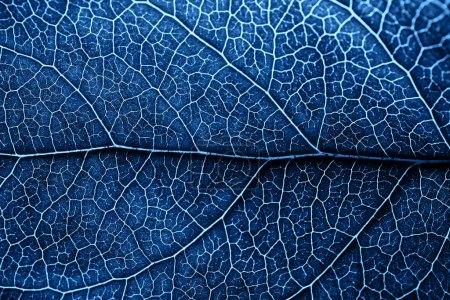Photo for Autumn blue leaf with brown spots. Skeleton leaf background with details. Macro. - Royalty Free Image