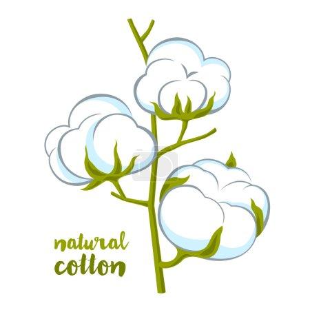 Illustration for Cotton brunch on white background - Royalty Free Image