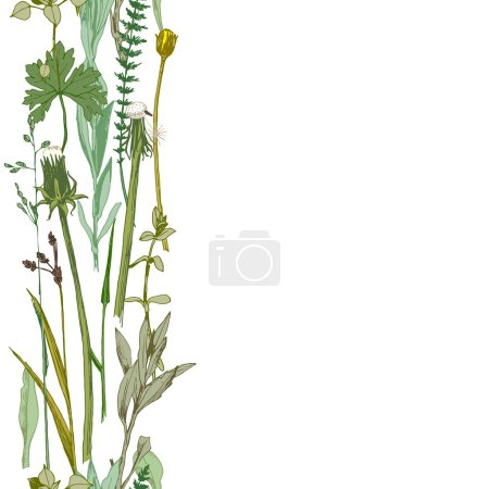 Illustration for Hand drawn vertical seamless herbal border - Royalty Free Image