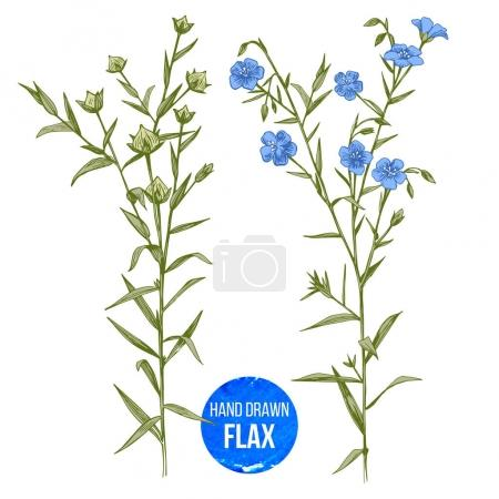 Illustration for Hand drawn colorful flax flowers and seeds - vector illustration - Royalty Free Image