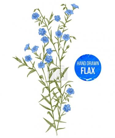 Illustration for Hand drawn colorful flax flowers - vector illustration - Royalty Free Image