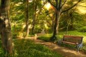 Park ,bench in the morning light.