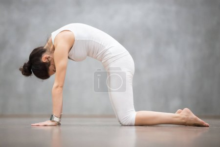 Photo for Beautiful young woman with tattoo on her foot meaning Wild cat working out against grey wall, doing yoga or pilates exercise. Cat, Marjaryasana, asana paired with Cow Pose on the inhale. Full length - Royalty Free Image