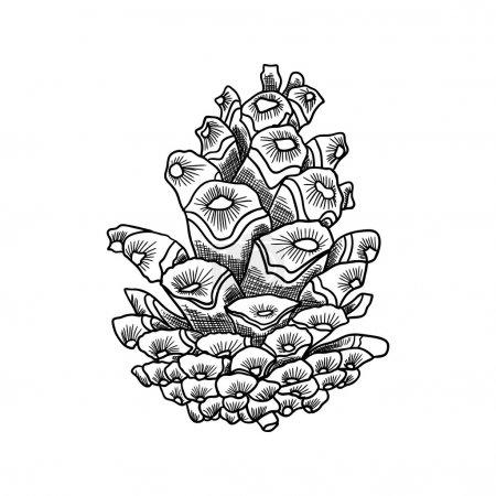 Conifer cone hand drawn sketch