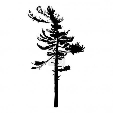 Photo pour Pin isolé sur fond blanc, de bois de silhouette et de sapin pour votre design, isolé. - image libre de droit