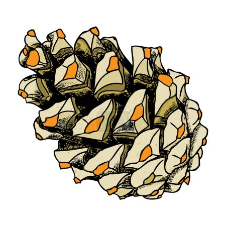 Hand drawing pine cone