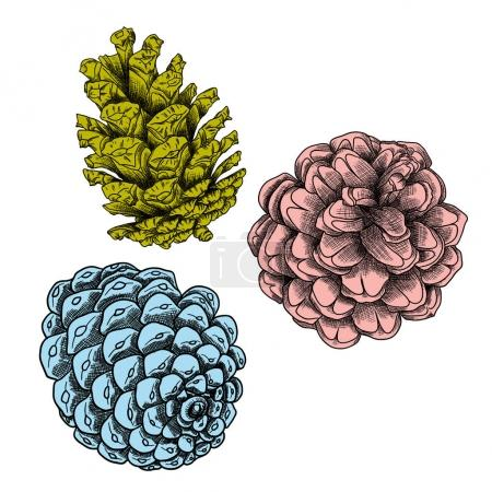 Hand drawing collection of pine cones