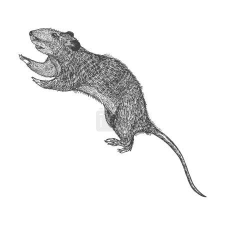 Rat hand drawn sketch