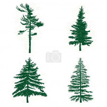 Set of different silhouettes of green pine trees, ...