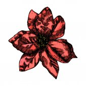 Holly flower decoration Christmas and holiday hand drawn element Vector
