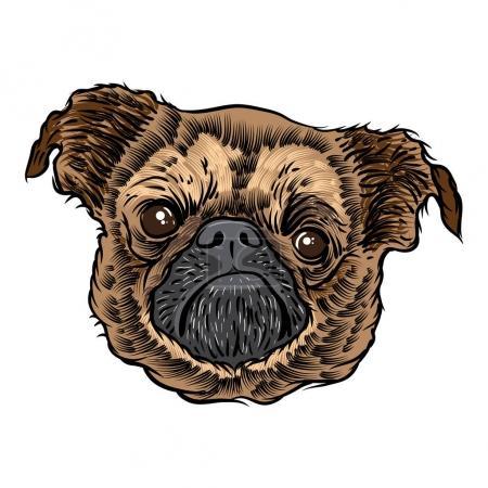 Pug puppy illustration