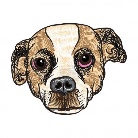 Portrait of Beagle puppy