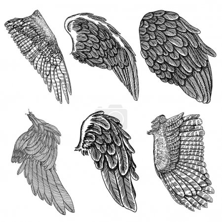 Hand drawn illustration of wings set