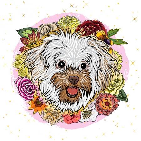 Cte Bolognese puppy girl