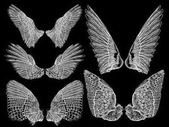 Spread set of wings Hand drawn etched woodcut vintage style pair of wing collection vector