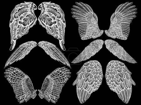 Set of spread wings