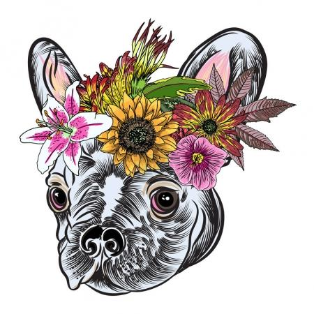 Illustration for Small cute French Bulldog puppy wearing exotic floral wreath, tattoo style concept on white background. Friendly doggy portrait. Vector illustration. - Royalty Free Image