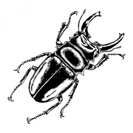 Insect stipple drawing set isolated