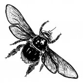 Insect stipple drawing isolated honey Bee Flying bug in trendy embroidery stippling and hatching shading style Vector