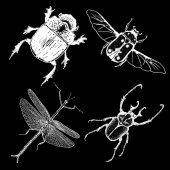 Insect stipple drawing set isolated Insects and bugs collection in trendy embroidery stippling and hatching shading style Vector