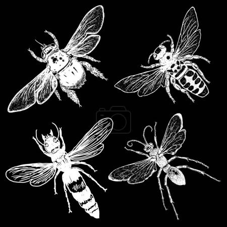 Set of four bees