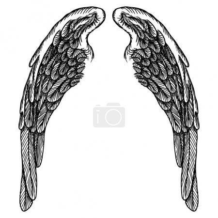 Spread set of wings