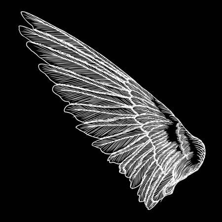 Hand drawn vintage bird wing