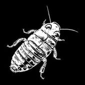 Insect stipple drawing isolated Cockroach or bug in trendy embroidery stippling and hatching shading style Vector