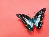 Graphium Agamemnon Butterfly With Open Wings On A Pink Striped C
