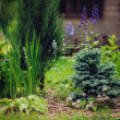 Garden view with various conifers and perennials p...