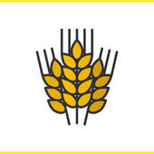 Wheat ears color icon
