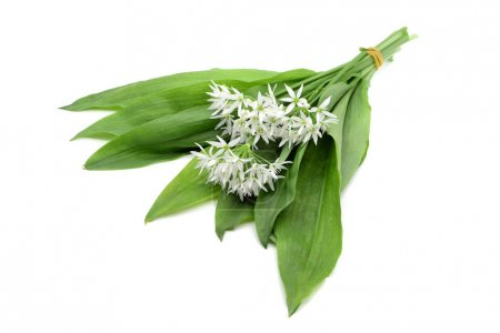 Photo for Bunch of ramson wild garlic flower heads and leaves on white isolated background. - Royalty Free Image