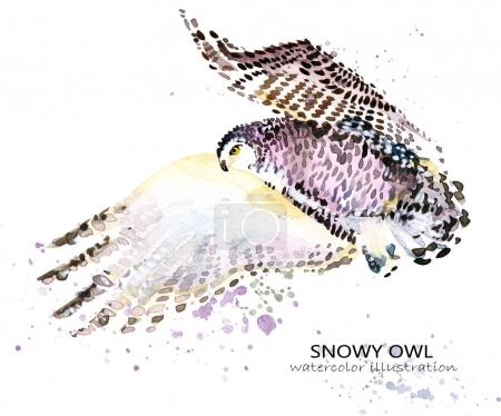 Snowy Owl watercolor illustration. Polar bird.