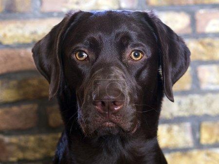 black dog on street
