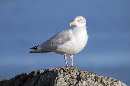 seagull bird on pier