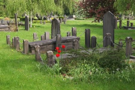 The municipal cemetery in Amsterdam, The Netherlands
