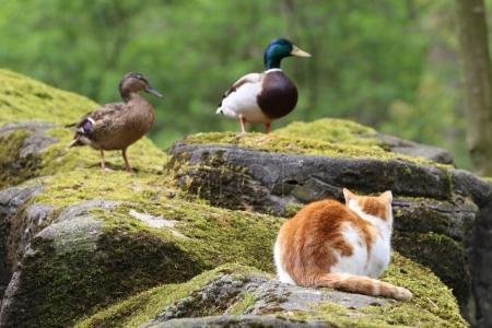 Cat sitting on rock and looking at birds