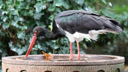 heron bird animal in nature habitat