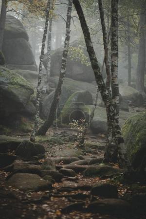 Photo pour Le sentier traverse une forêt de vieux noire mystérieuse dans le brouillard. Matin d'automne en Sibérie. Atmosphère magique - image libre de droit
