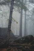 Trees in mysterious dark old forest in fog. Autumn morning. Fair