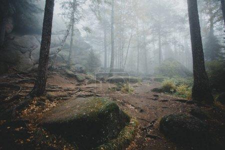 Photo pour Arbres dans la forêt mystérieuse de vieux foncé dans le brouillard. Matin d'automne. Atmosphère magique de contes de fées - image libre de droit