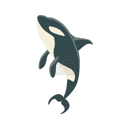 Orca Black And White Arctic Killer Whale Swimming, Realistic Aquatic Mammal Vector Drawing