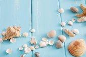 Mušle na modrém pozadí dřeva, dovolená moře