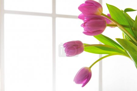 Foto de Hermosas flores ramo de fondo. Tulipanes violetas en retroiluminación de ventana con espacio para copiar. Mockup para tarjeta de felicitación - Imagen libre de derechos