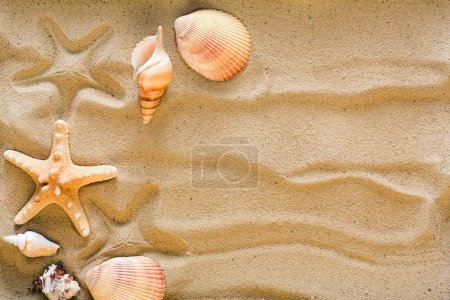 Photo for Sea beach sand background with seashells and starfish, top view. Natural seashore textured surface, copy space - Royalty Free Image
